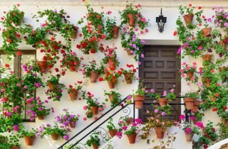 Cordoba's narrow alleys and colourful streets will make you fall in love with this charming city