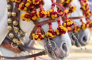 Decorated horses for traditional festival - Malaga