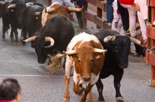 Running of the bulls as part of the traditional celebration at the festival of San Fermin in Pamplona.