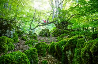 Forrest - Navarra. Mythology and nature in a magical landscape